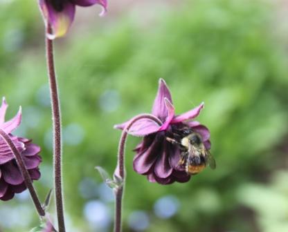 Flower&bee