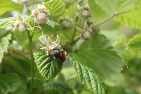 Flowerandhoneybee